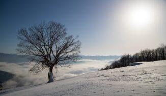 北尾根高原約束の木